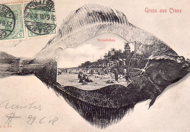 Кранц 1908