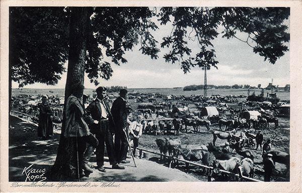 Лошадиный рынок в Велау 1934