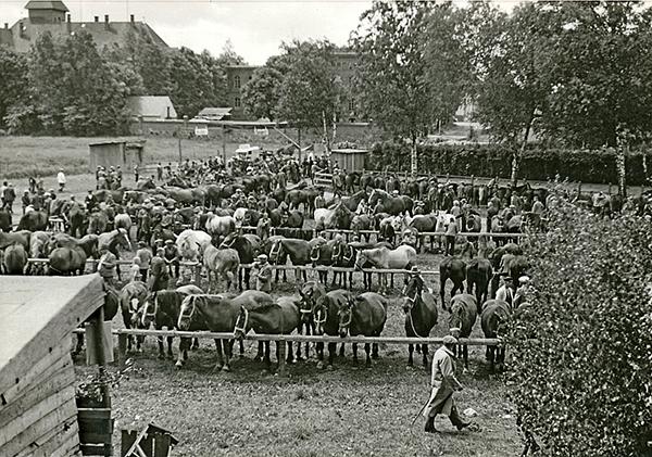Лошадиный рынок в Велау_1930-е