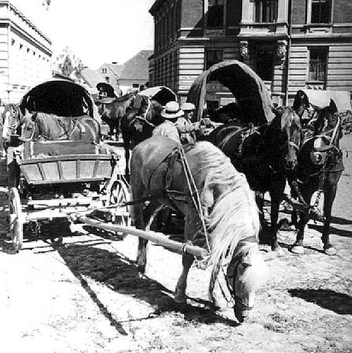 Der Auftrieb zum Pferdemarkt durch Wehlaus Strassen