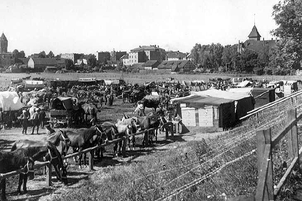 Лошадиный рынок в Велау Pferdemarkt in Wehlau