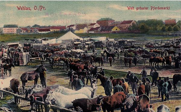 Лошадиный рынок в Велау Wehlau Welt Grosster Pferdemarkt 1909