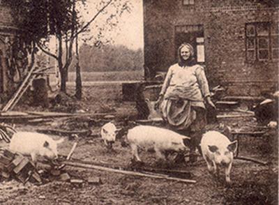 И снова свиньи!