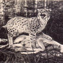 Из истории охоты в Роминтской пуще
