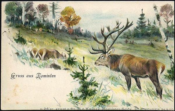 Rominten 24-9-1900 24er erlegt