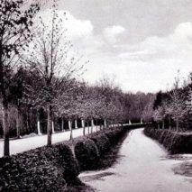Городской лесопарк «Фихтенвальде» в Гумбиннене