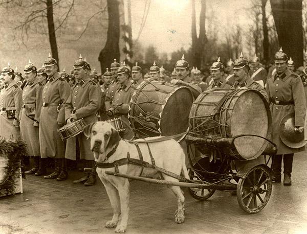 43 Inf-Regiment und Paukenhund 1912