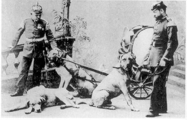 Pasha und Sultan Koenigsberg 1904