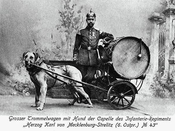 Paukenhund mit Trommelwagen 6 Ostpr Regiment