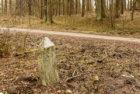 Лесоустройство Роминтской пущи