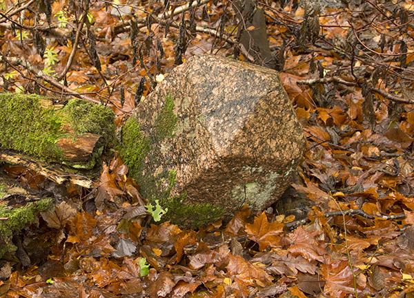 Rominter Heide stein-2