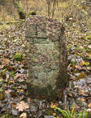 Rominter Heide stein лесоустройство роминтской пущи