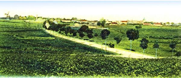 Tapiau Koenigsberger-Chaussee 1900-1910 дом у шоссе
