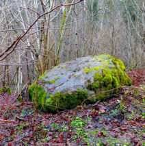 Памятники природы Роминтской пущи